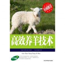 高效养羊技术